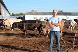Comment les éleveurs engraissent-ils les bœufs aujourd'hui ?
