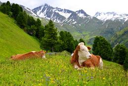 Préserver le bien-être animal avant tout ?