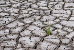 Viande et réchauffement climatique : quel lien ?